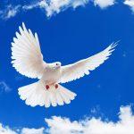 Siapa Yang Boleh Datang Kepada Tuhan