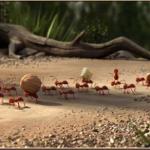 Belajar Kehidupan Dari Binatang Semut